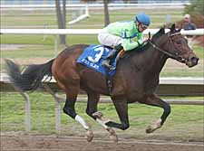 Kentucky Derby Trail: Have We Got a Mile and a Quarter Horse For You