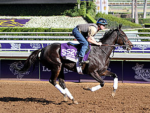 Leigh Court - Breeders' Cup 2014