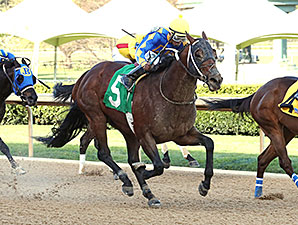 Lemon Drop Dream Heads Maryland Sprint H.