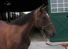 Top 10 Bloodhorse.com Videos of 2008