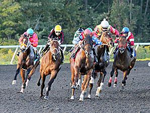 Less Than Perfect wins the 2014 Fitz Dixon, Jr. Memorial Juvenile Stakes.