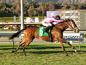 Lexie Lou wins the 2014 Autumn Miss Stakes.