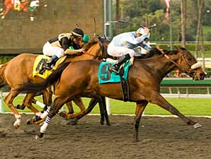 Life is Sweet wins the 2009 La Canada