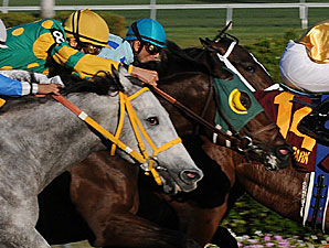 Lime Rickey's Turn in Colonial Turf Cup?