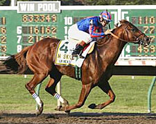 Haskell Hero Lion Heart New Leader of Pack