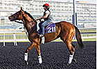Little Mike, Monterosso Meet at Meydan