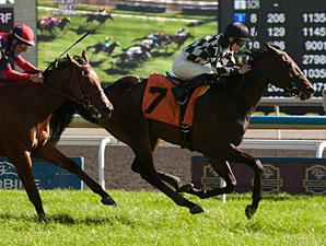 Llanarmon wins the 2013 Natalma Stakes.