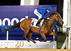 Local Time Continues Meydan Dominance