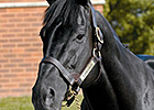 Darley Sire Lonhro Enters Australian Hall