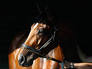 No Travers for 'Lucky'; Colt Had Fever