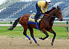 Co-Favorites in Early Preakness Wagering