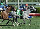 Sunshine Millions Repeat for Manchurian High