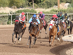Lotsa Mischief wins the 2014 Turf Paradise Derby.