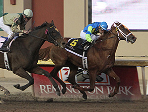 Louies Flower Blooms in Springboard Mile