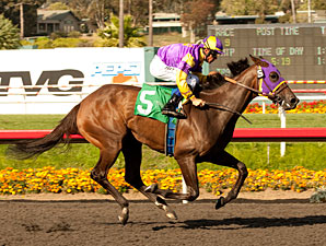 Love Theway Youare wins the 2012 Vanity.