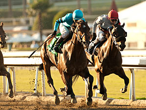 Lucky Primo wins the 2012 Lava Man California Cup Classic.