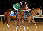 Lucy's Bob Boy Romps in WV Breeders' Classic