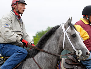 West Point Thoroughbreds in Limelight