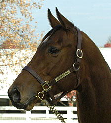 Grade I Winner/Producer Madcap Escapade Dies