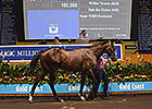 Records Fall at Magic Millions Book 2 Sale