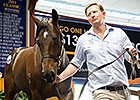 Foxwedge Colt Tops Magic Millions Sale