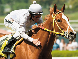 Magnificience Looks to Rebound