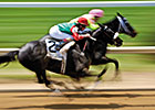 MaidenWatch: Time to Vote for 2014 Stallions