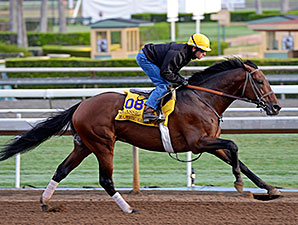 Majestic Harbor works towards the Breeders' Cup.