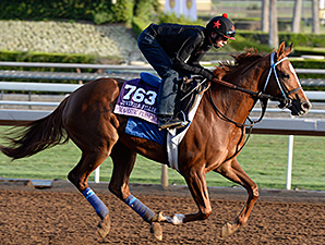 Majestic Presence preps for the 2014 Breeders' Cup.