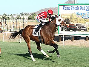 Mambo Man wins the Hasta La Vista Handicap.