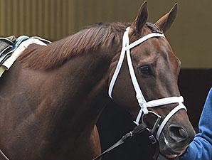 Mamdooha wins the 2015 Correction Stakes.