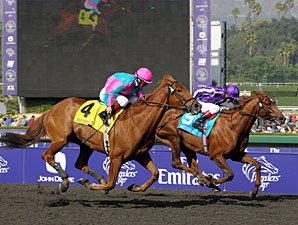 Man of Iron wins the 2009 Breeders' Cup Marathon.