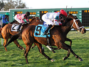 Man Of Strife wins the 2011 Gentilly Stakes.