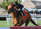 Manchurian High Wins Sunshine Millions Turf