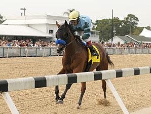 Manuka Honey wins the 2013 Suncoast Stakes.