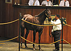 Scat Daddy Colt Sells for $400,000 at OBS
