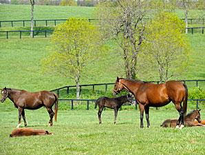 FL Breeder, Stallion Owner Bonuses Approved