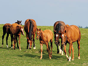 Live Foals Down 14.2% from 2009