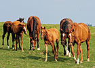Report of Mares Bred Shows Modest Increase
