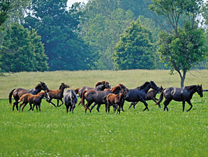 Report Shows Breeding Steadied in 2012