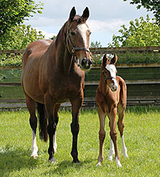 Mariah's Storm Produces Galileo Filly