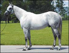 Pin Oak Stallion Maria's Mon Dead