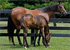 MarketWatch Broodmare of the Year