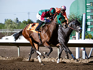 Marks Mine wins the 2013 Harvest Stakes.
