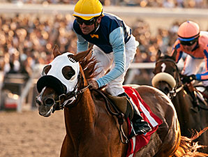 Master the Blues wins the 2014 Daisycutter Handicap.