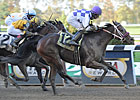 Juveniles Vie in NY Stallion Series Divisions