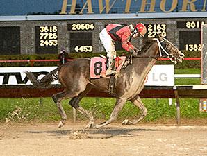 Mavericking wins the 2013 Buck's Boy Handicap.