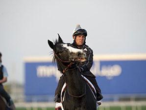 Meandre - Dubai March 27, 2013
