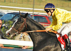 Meandre Decisive Winner at Longchamp