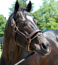 Darley Purchases Hot Sire Medaglia d'Oro